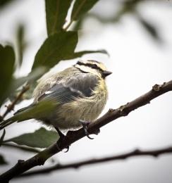 Some bird in garden