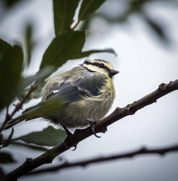 Some bird in garden by Bigpoolman