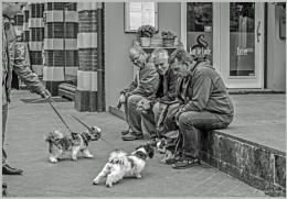 Doggy talk