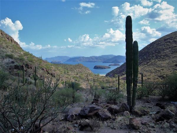 Cactus Bay by PentaxBro