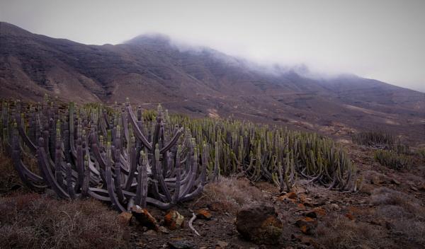 Cactus Hills by PentaxBro