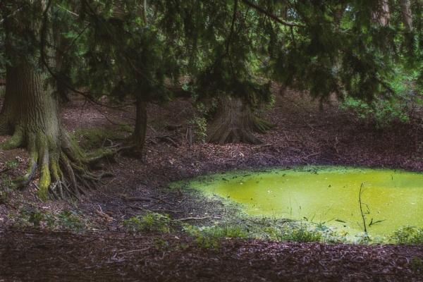 Deep in the woods by jpappleton