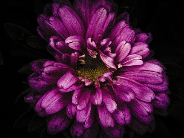 Flower by DorothyD