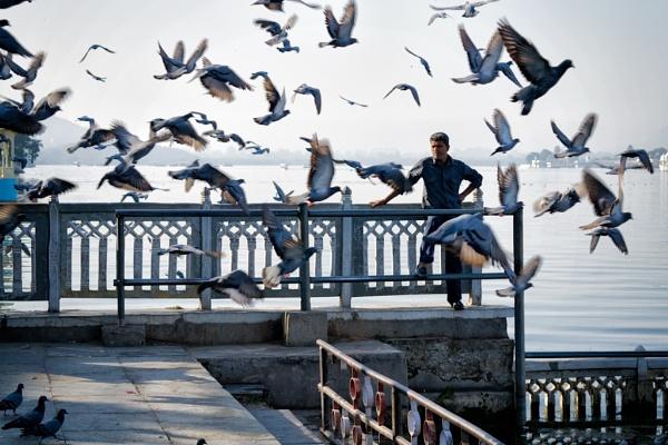 Pigeons by YasserAlaaMobarak