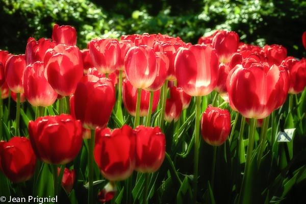 Spring by Jprigniel
