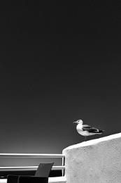 Solo seagull