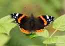 Butterfly by razer