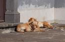 Lazy Sunday by Silverzone