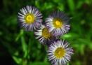 Hardwick Hall Flowers by mmart