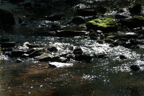 In The Stream by Merlin_k