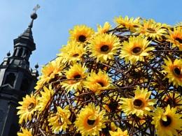 Sunflowers in Krakow