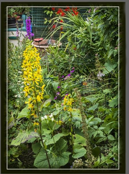 The later Summer garden by derekp