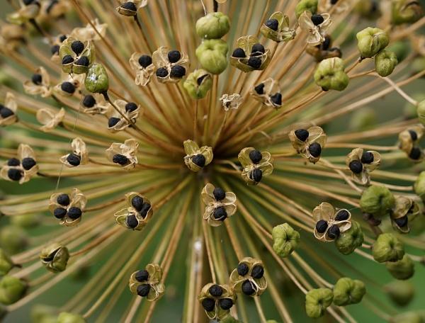 Garden plant image. by georgiepoolie