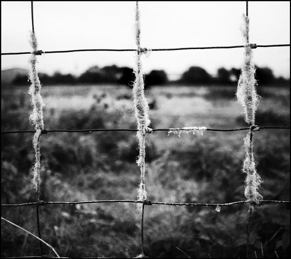 Field by bwlchmawr