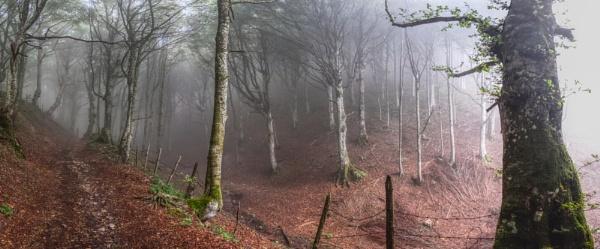 Monte Fumaiolo by erino
