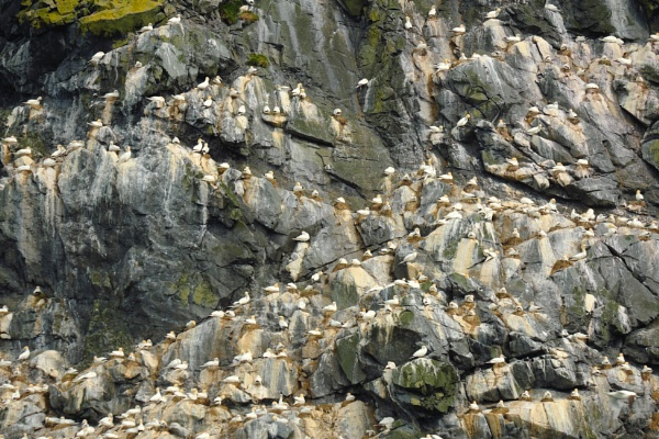 The Gannet City by themak