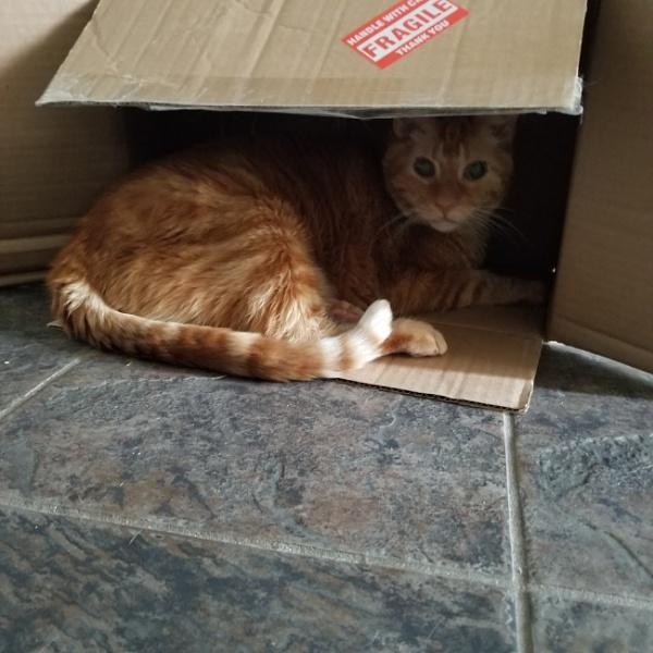 Boxx cat by lude69dotcom