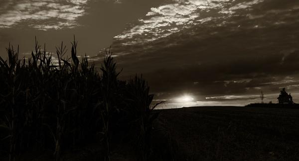 cornn field by mogobiker