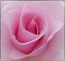 Pink Swirl by ThePixelator