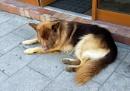 Resting Dog by kombizz