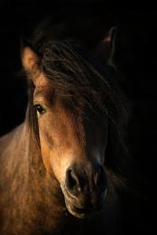 Freiston Pony