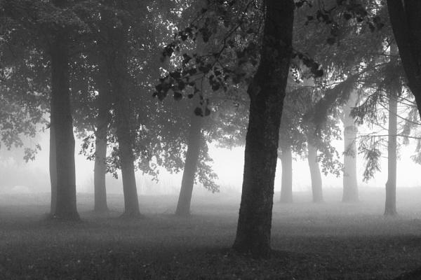 Fog by Zenonas