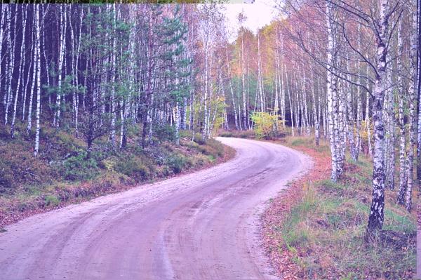 Birch Forest Road by PentaxBro