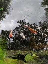 Fish chat