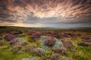 Patchwork Landscape by martin.w