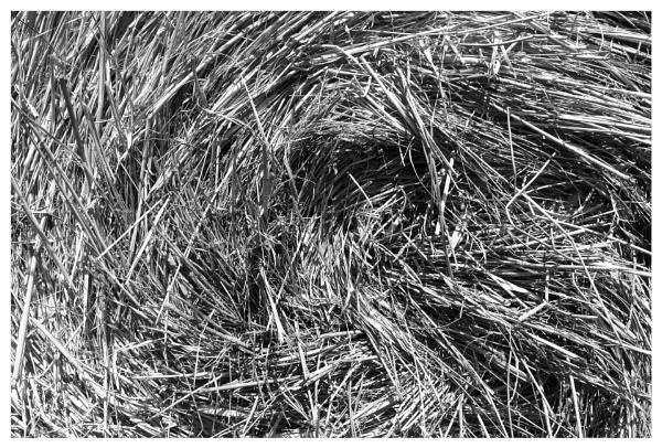 bale of straw by bliba