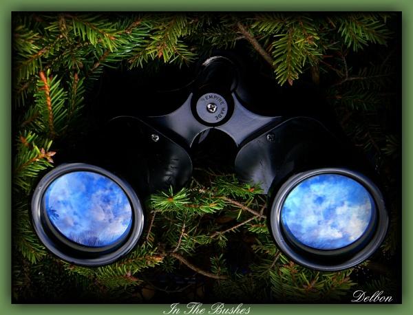 In The Bushes by Delbon