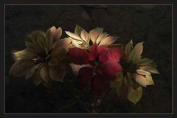 Flowers by prabhusinha