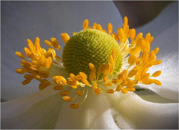 Inside a flower by mjparmy