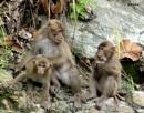 Monkey family at Kalimpong,West Bengal. by debu
