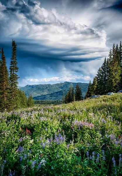 Storm of Beauty by mlseawell