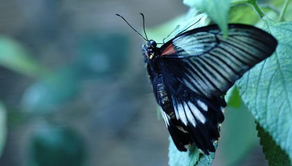 Farfalla 6 by patri