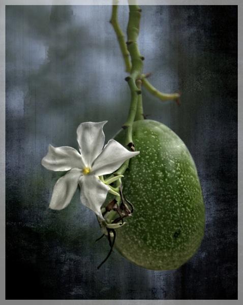 Fruity by sweetpea62