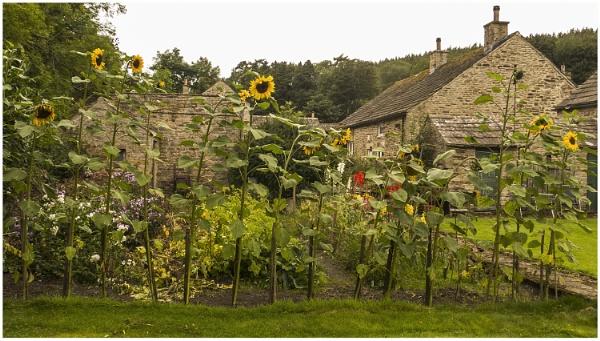 cottage garden, rural Northumberland by derekp
