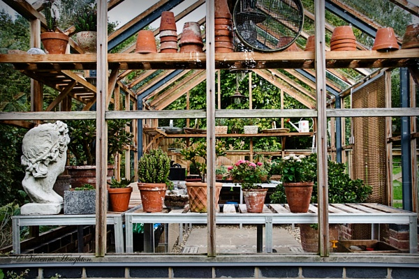Greenhouse by vivdy