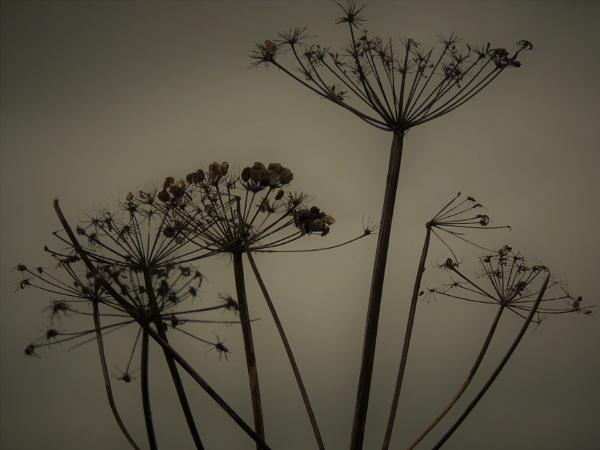 Seed heads by ANNDORASBOX