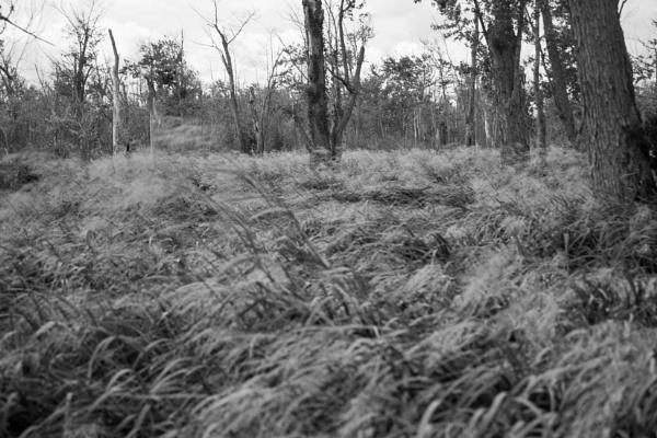 Wetlands II by Relic01