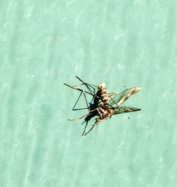 Moquito on Front Door by tonyguitar