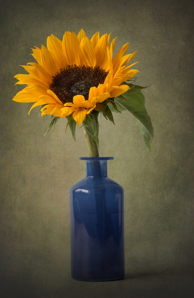 Sunflower in a Blue Glass Vase by flowerpower59