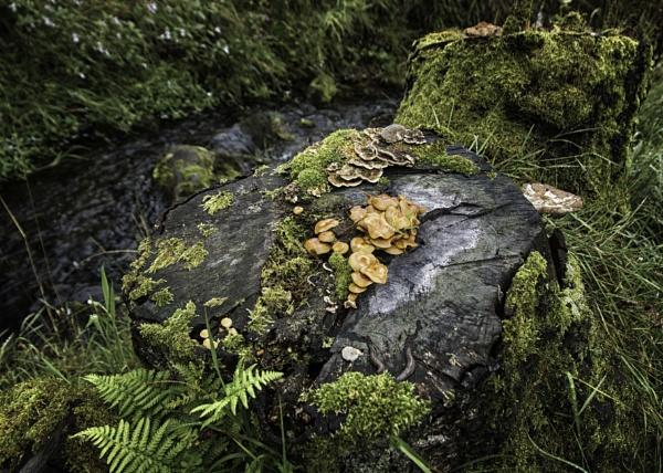 Tree stumps by BillRookery
