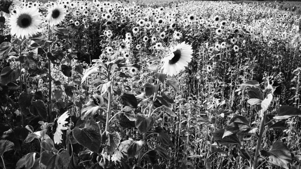 Black and White Sun by Lovepics121