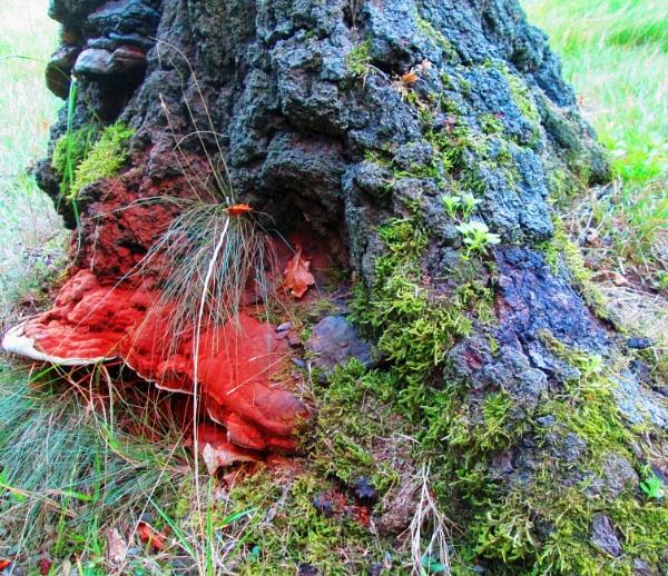 Fungi by KrazyKA