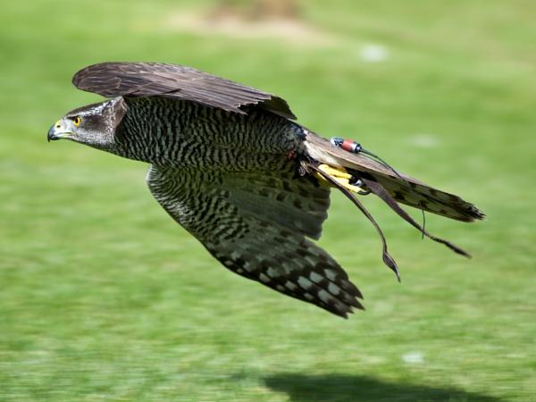 the flight by Owen05