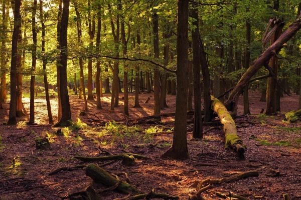 Forest Wilderness by PentaxBro