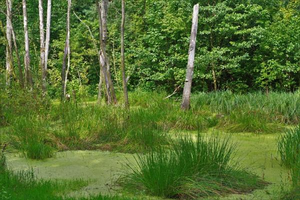 FOREST BOG by PentaxBro