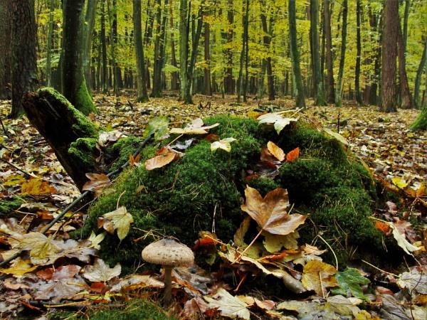 FOREST TURTLE & MUSHROOM by PentaxBro